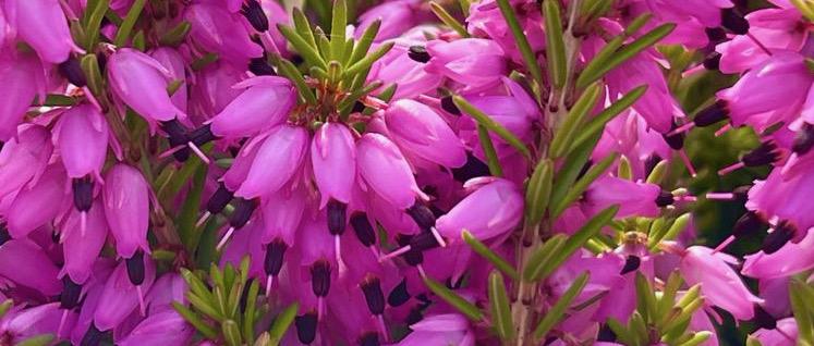 Healing Habits in Spring